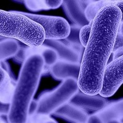 Are there germs in my carpets?