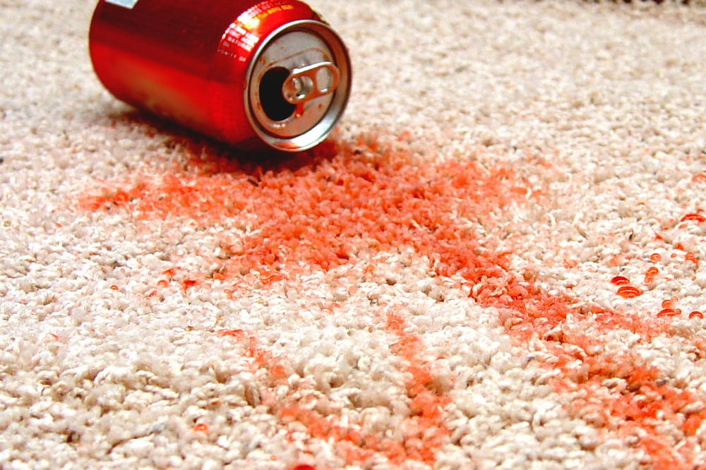 stain carpet