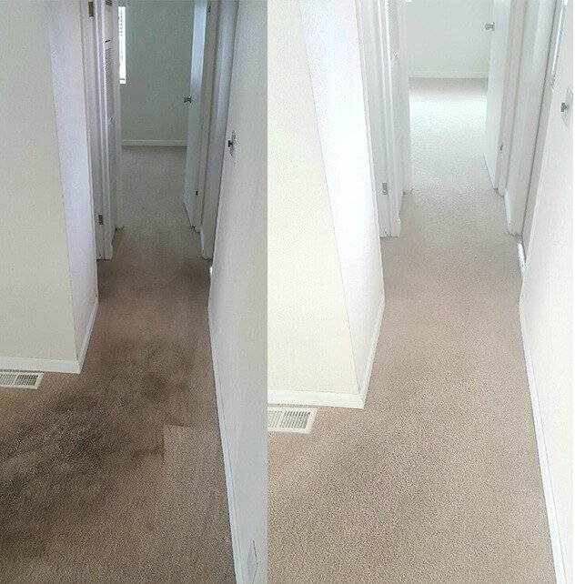 carpet cleaning Dudley