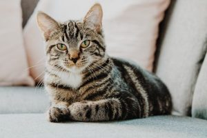 How to Clean Cat Urine Odors And Stain