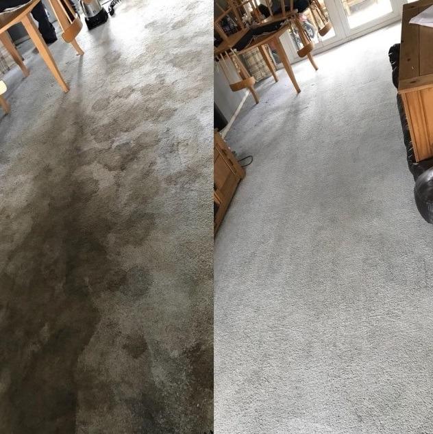 carpet cleaner Northfield