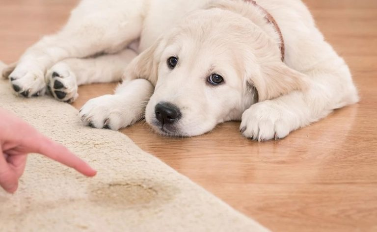 Tips to remove stains and bad odor from carpet
