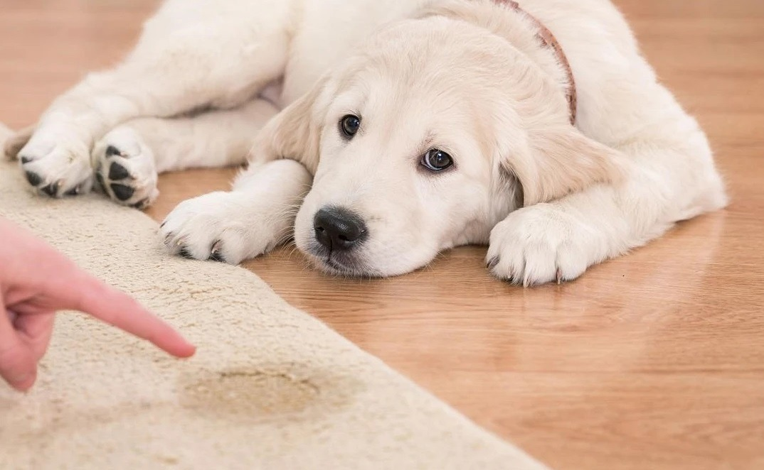 remove stains and bad odor from carpet