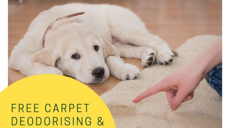 carpet odor remover