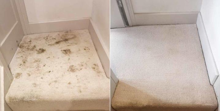 Carpet Cleaner Brierley Hil